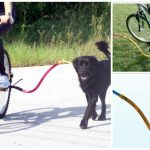 Las 10 mejores correas de bicicleta para perros