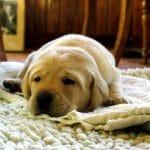 Las 10 mejores alfombras higiénicas para tu mascota