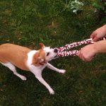 Los 10 mejores mordedores para cachorros de perro