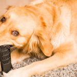 Los 10 mejores juguetes para limpiar los dientes de tu perro